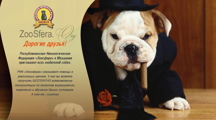 Республиканская Кинологическая Федерация Молдавии «Зоосфера» приглашает всех любителей собак!
