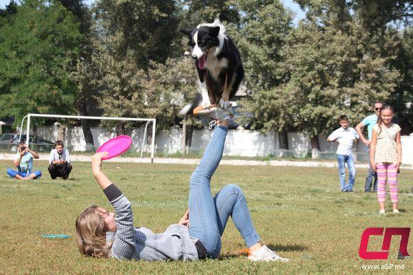 Танцы с собаками понравились всем